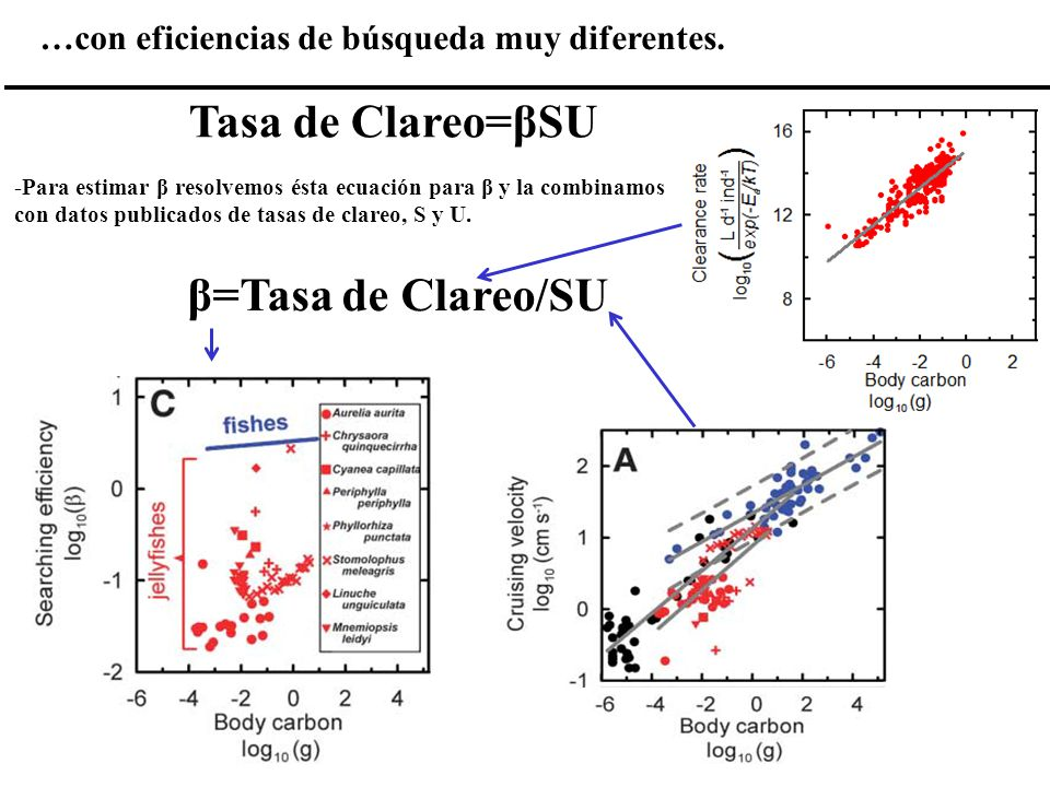 Tasa de Clareo=βSU β=Tasa de Clareo/SU