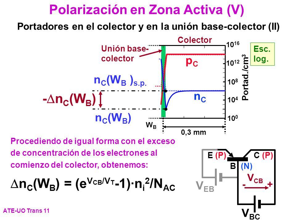Polarización en Zona Activa (V)