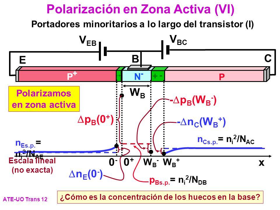 Polarizamos en zona activa Escala lineal (no exacta)
