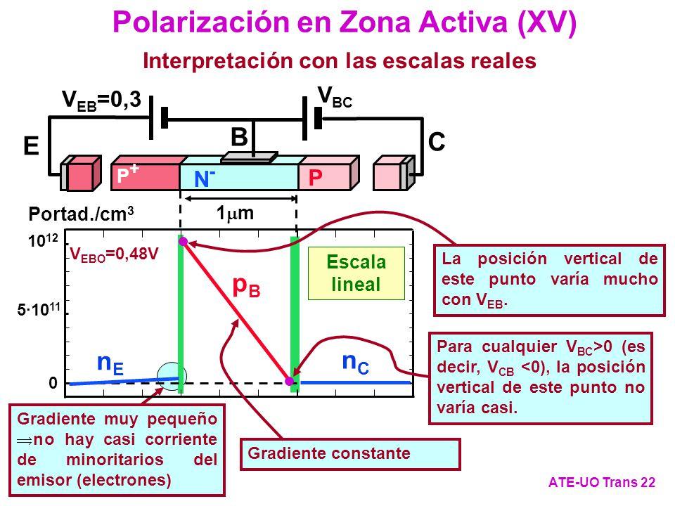 Polarización en Zona Activa (XV)