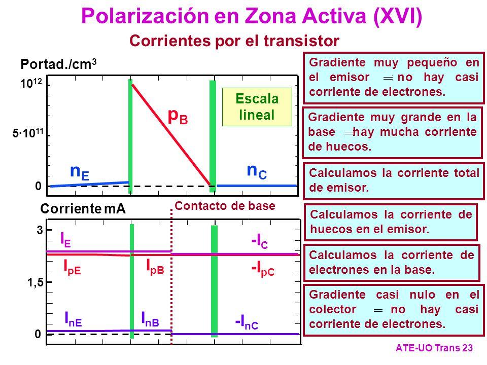 Polarización en Zona Activa (XVI)