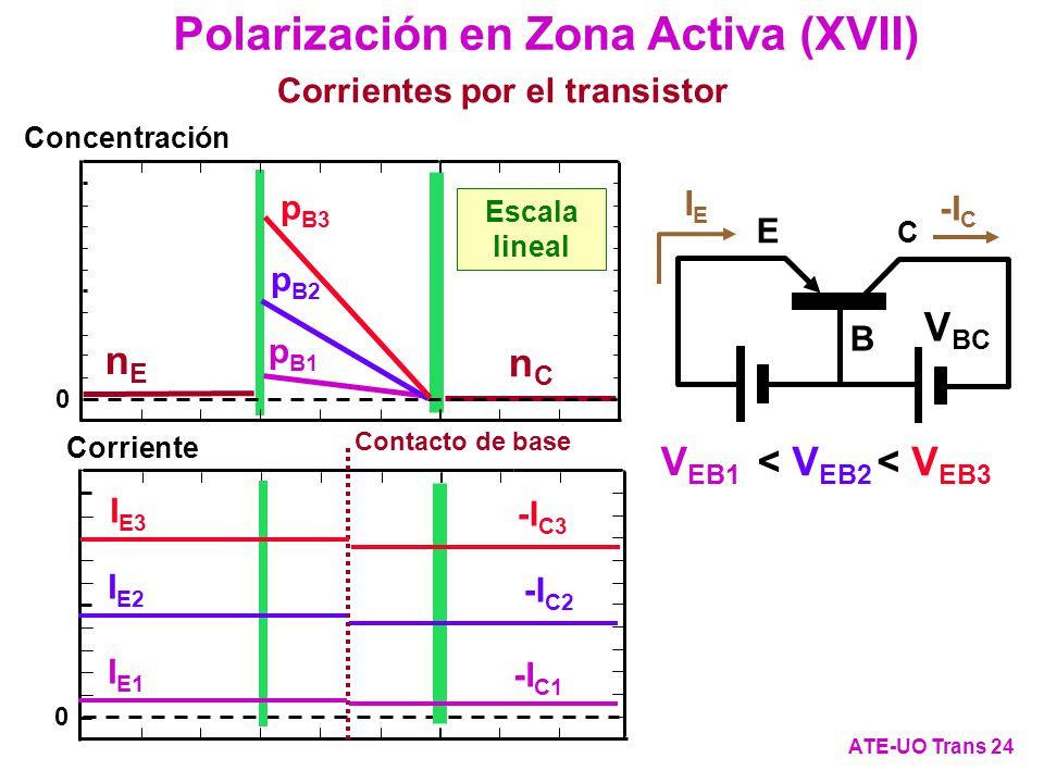 Polarización en Zona Activa (XVII)