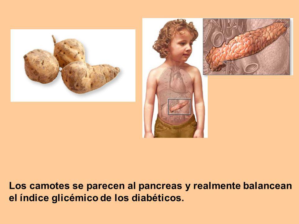 Los camotes se parecen al pancreas y realmente balancean el índice glicémico de los diabéticos.