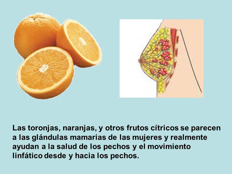 Las toronjas, naranjas, y otros frutos cítricos se parecen a las glándulas mamarias de las mujeres y realmente ayudan a la salud de los pechos y el movimiento linfático desde y hacia los pechos.