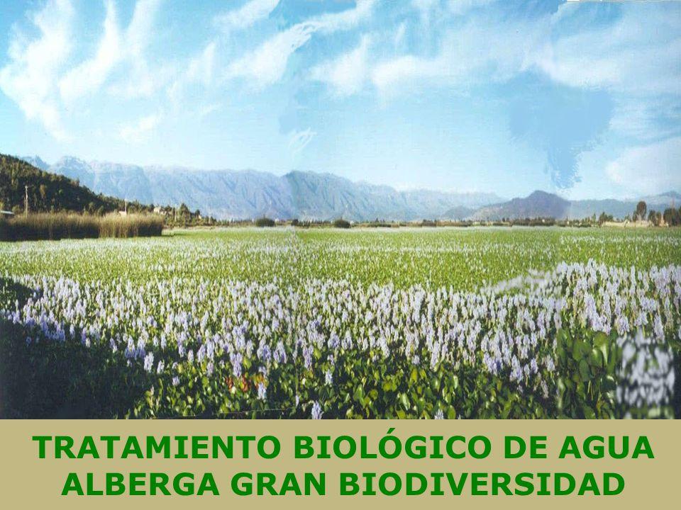 TRATAMIENTO BIOLÓGICO DE AGUA ALBERGA GRAN BIODIVERSIDAD