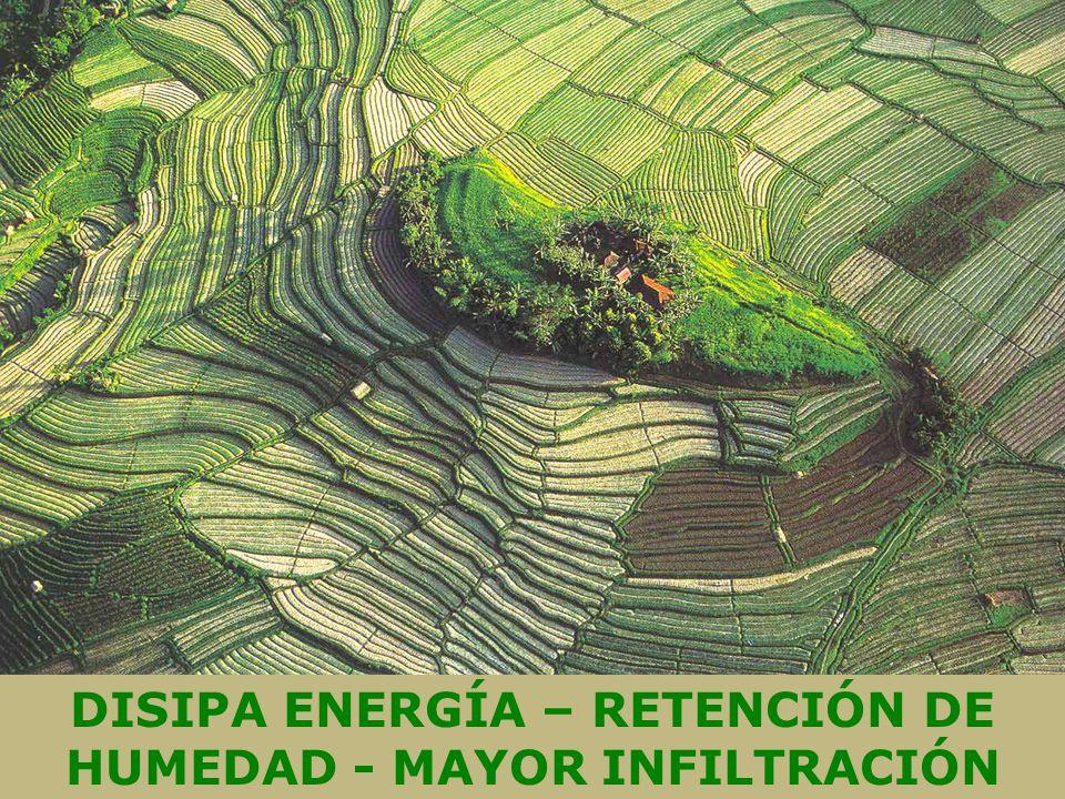DISIPA ENERGÍA – RETENCIÓN DE HUMEDAD - MAYOR INFILTRACIÓN