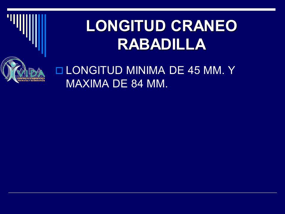 LONGITUD CRANEO RABADILLA
