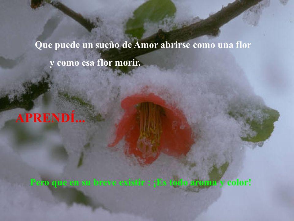APRENDÍ... Que puede un sueño de Amor abrirse como una flor