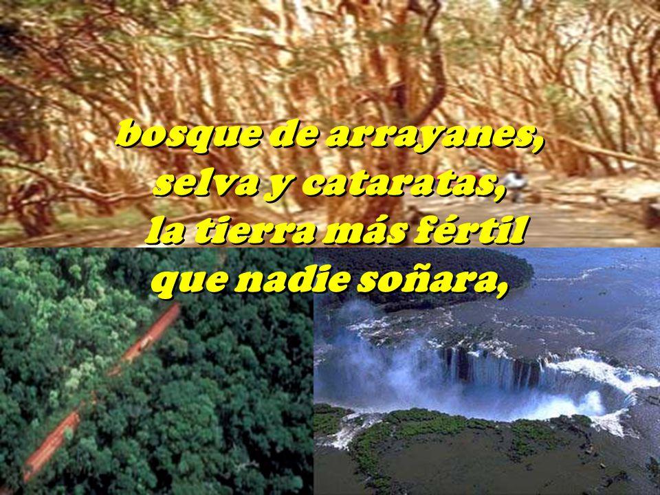 bosque de arrayanes, selva y cataratas, la tierra más fértil que nadie soñara,