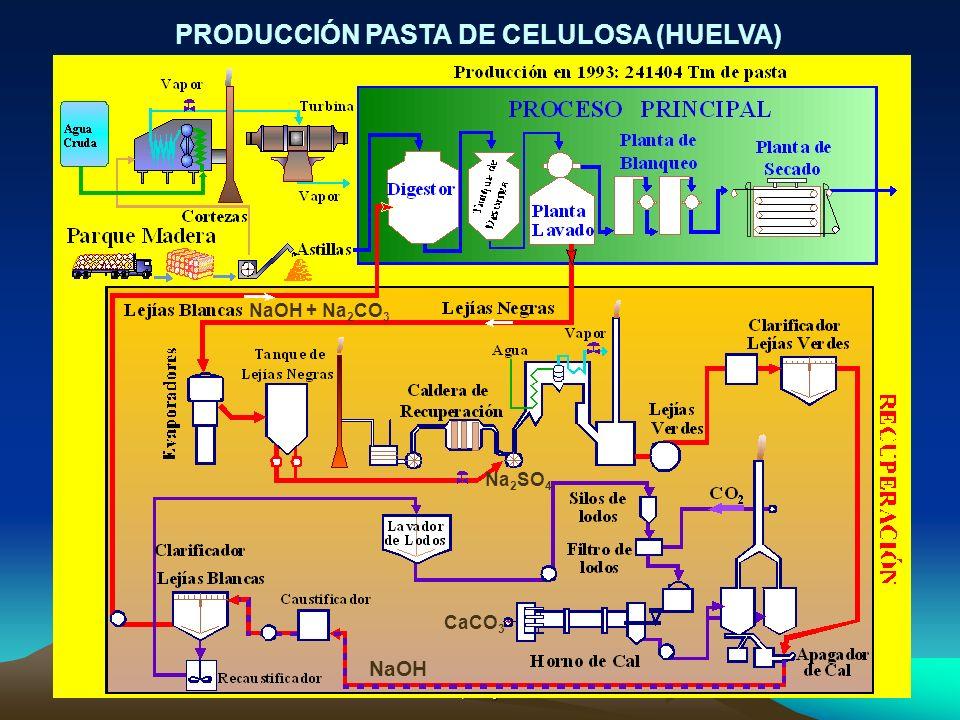 PRODUCCIÓN PASTA DE CELULOSA (HUELVA)