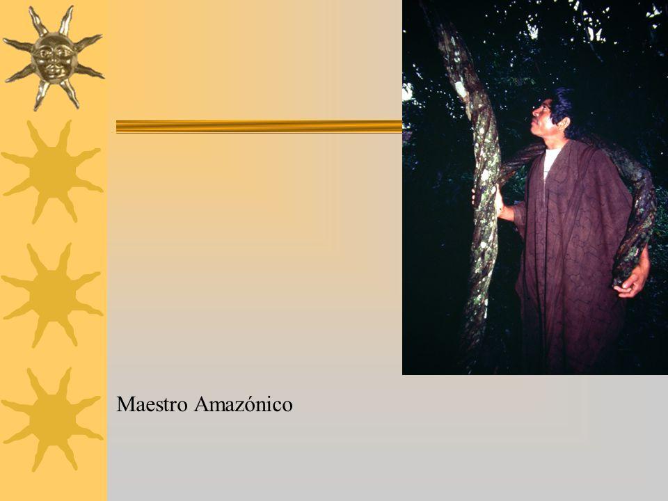 Maestro Amazónico