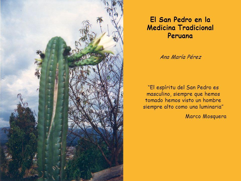 El San Pedro en la Medicina Tradicional Peruana