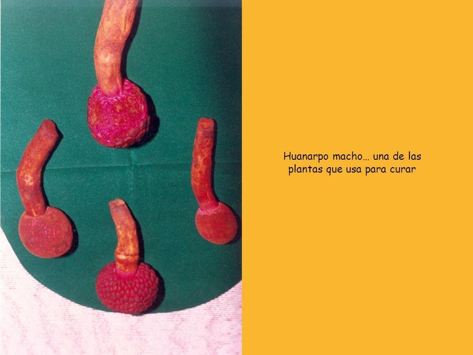 Huanarpo macho… una de las plantas que usa para curar
