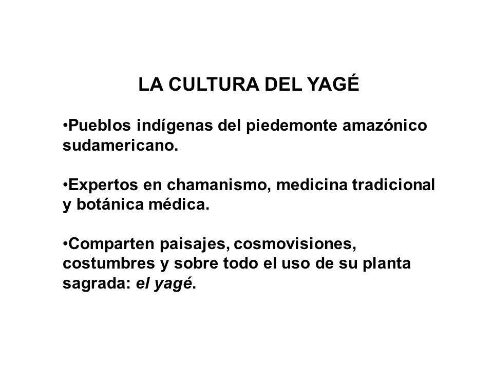 LA CULTURA DEL YAGÉ Pueblos indígenas del piedemonte amazónico sudamericano. Expertos en chamanismo, medicina tradicional y botánica médica.
