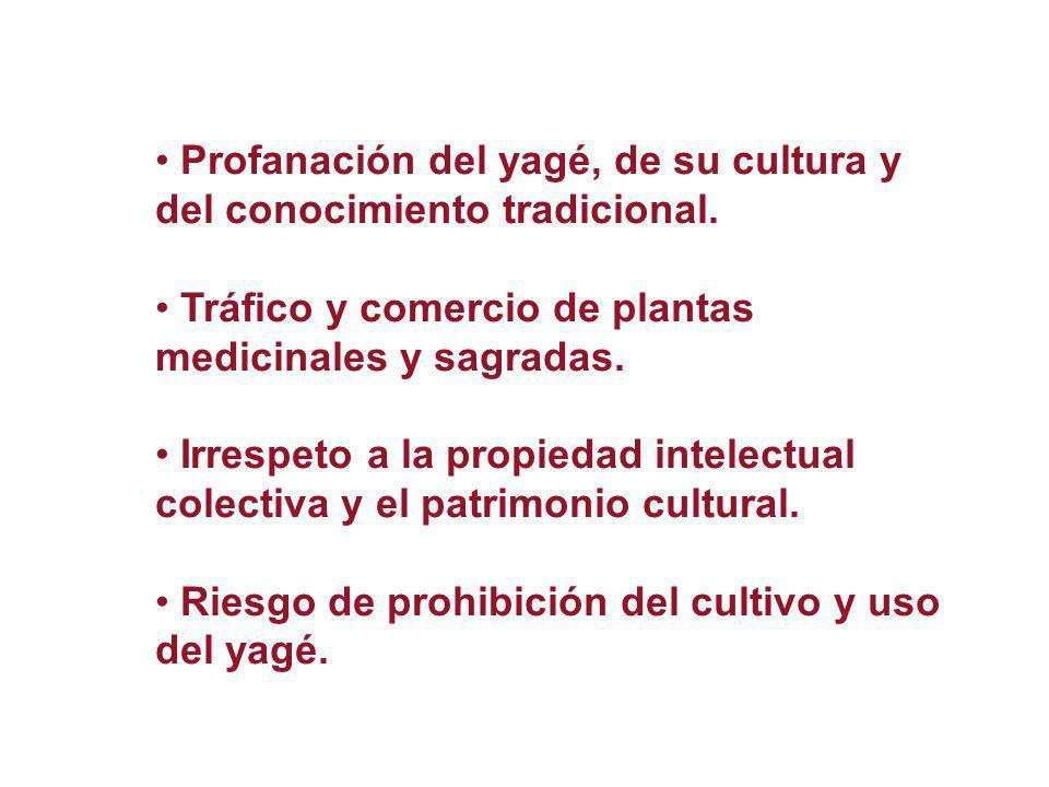 Profanación del yagé, de su cultura y del conocimiento tradicional.