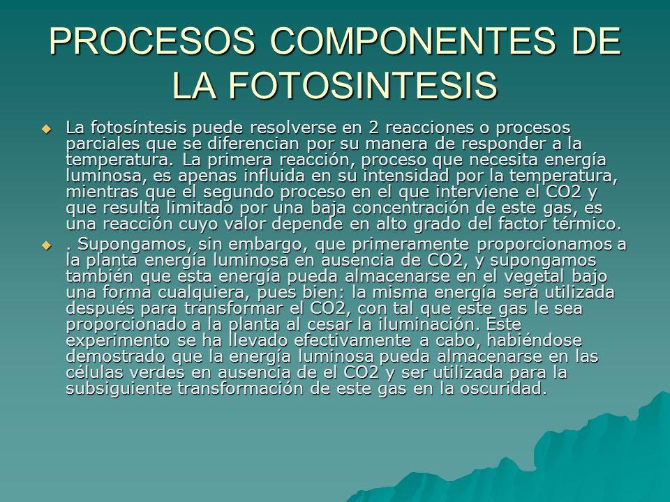 PROCESOS COMPONENTES DE LA FOTOSINTESIS