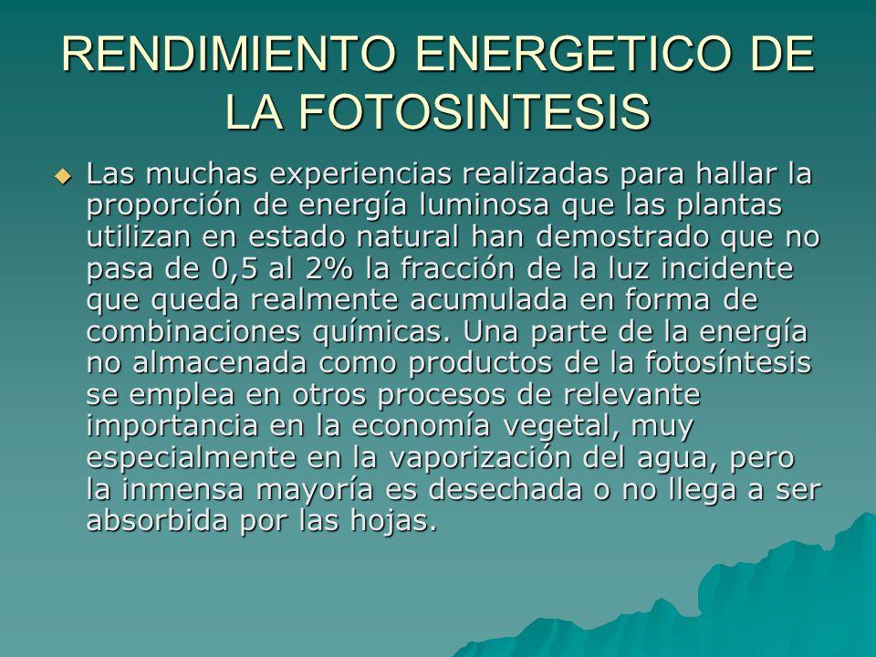 RENDIMIENTO ENERGETICO DE LA FOTOSINTESIS
