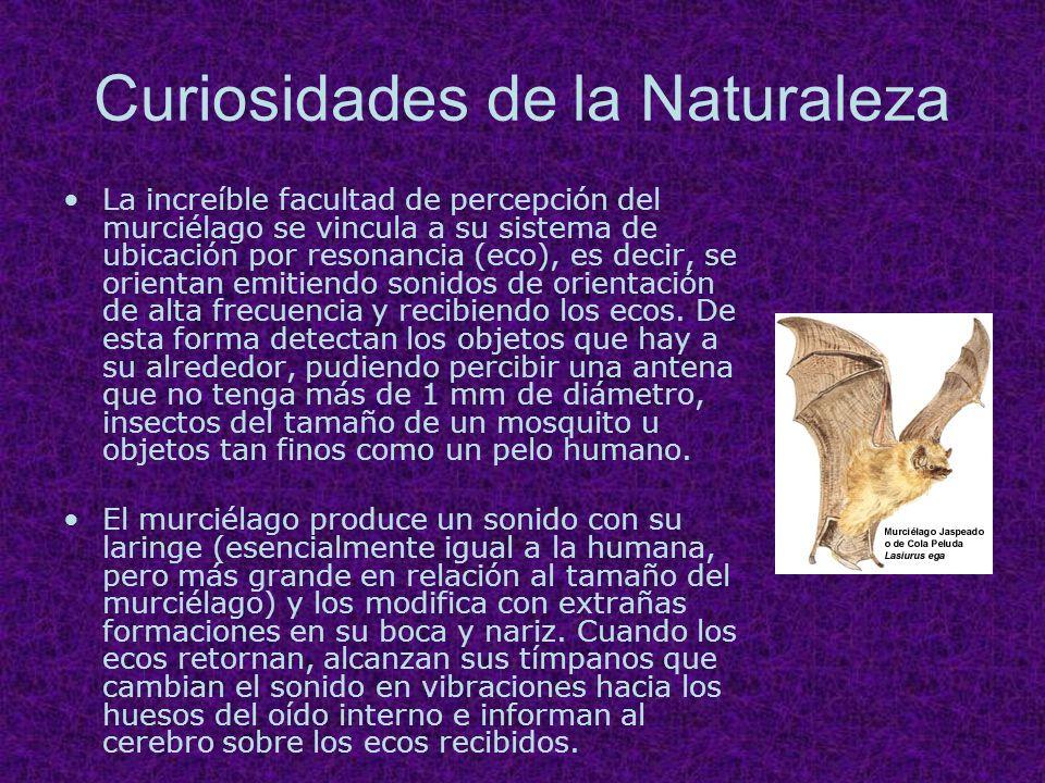 Curiosidades de la Naturaleza
