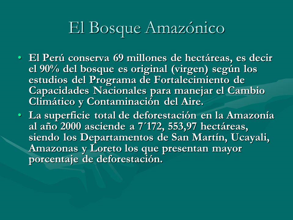 El Bosque Amazónico