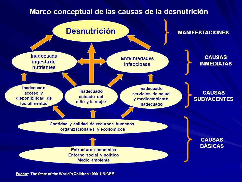 Desnutrición Marco conceptual de las causas de la desnutrición