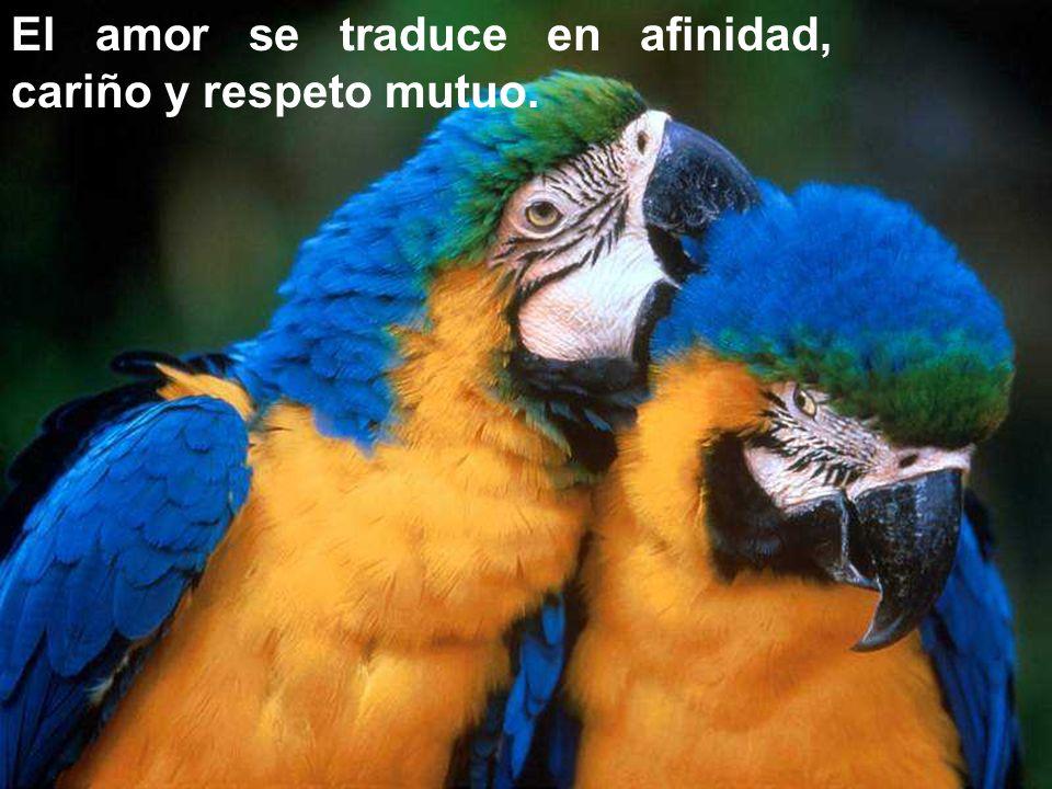 El amor se traduce en afinidad, cariño y respeto mutuo.
