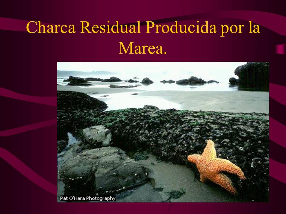 Charca Residual Producida por la Marea.