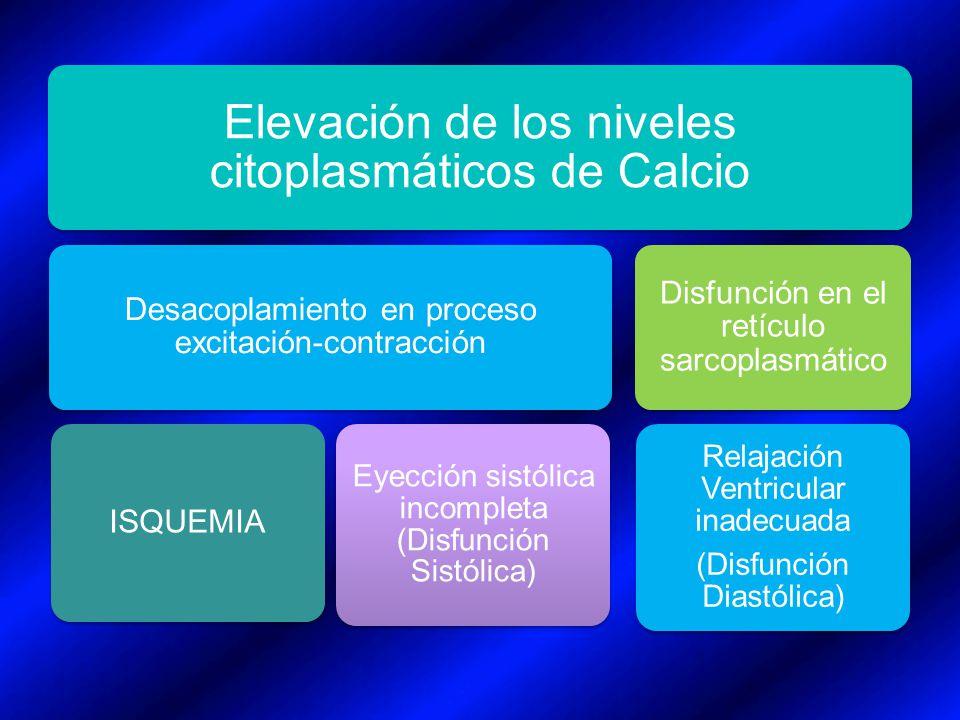 Elevación de los niveles citoplasmáticos de Calcio