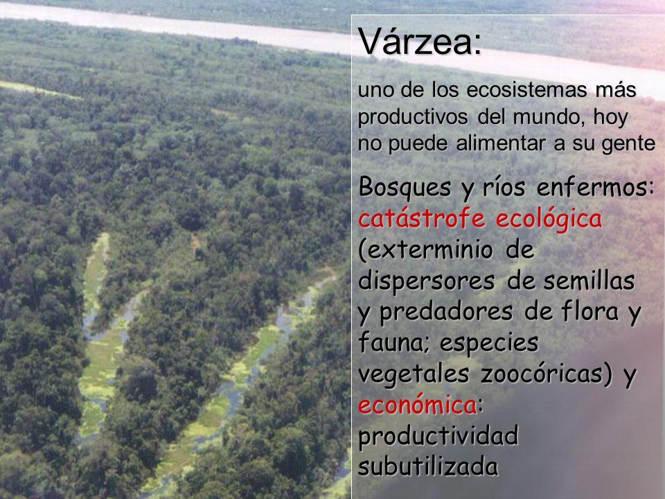Várzea: uno de los ecosistemas más productivos del mundo, hoy no puede alimentar a su gente.