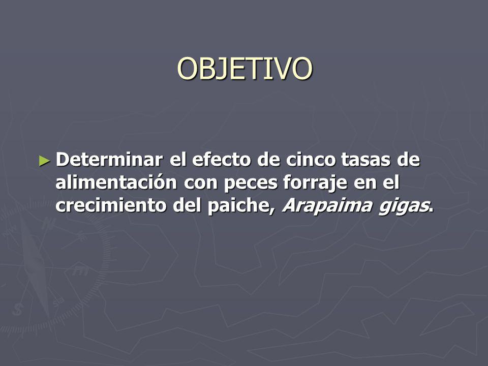 OBJETIVO Determinar el efecto de cinco tasas de alimentación con peces forraje en el crecimiento del paiche, Arapaima gigas.