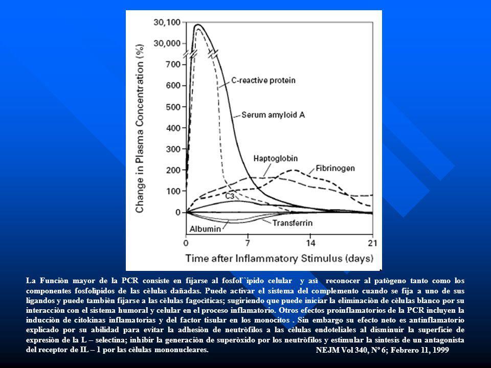 La Funciòn mayor de la PCR consiste en fijarse al fosfol``ipido celular y asì reconocer al patògeno tanto como los componentes fosfolìpidos de las cèlulas dañadas. Puede activar el sistema del complemento cuando se fija a uno de sus ligandos y puede tambièn fijarse a las cèlulas fagocìticas; sugiriendo que puede iniciar la eliminaciòn de cèlulas blanco por su interacciòn con el sistema humoral y celular en el proceso inflamatorio. Otros efectos proinflamatorios de la PCR incluyen la inducciòn de citokinas inflamatorias y del factor tisular en los monocitos . Sin embargo su efecto neto es antinflamatorio explicado por su abilidad para evitar la adhesiòn de neutròfilos a las cèlulas endoteliales al disminuir la superficie de expresiòn de la L – selectina; inhibir la generaciòn de superòxido por los neutròfilos y estimular la sintesis de un antagonista del receptor de IL – 1 por las cèlulas mononucleares.