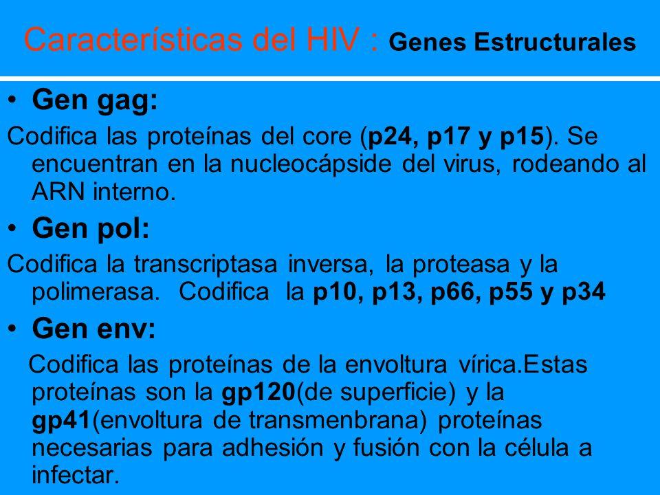 Características del HIV : Genes Estructurales