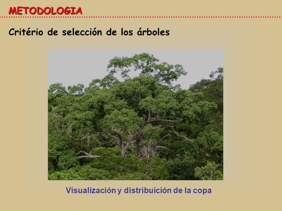 Visualización y distribuición de la copa