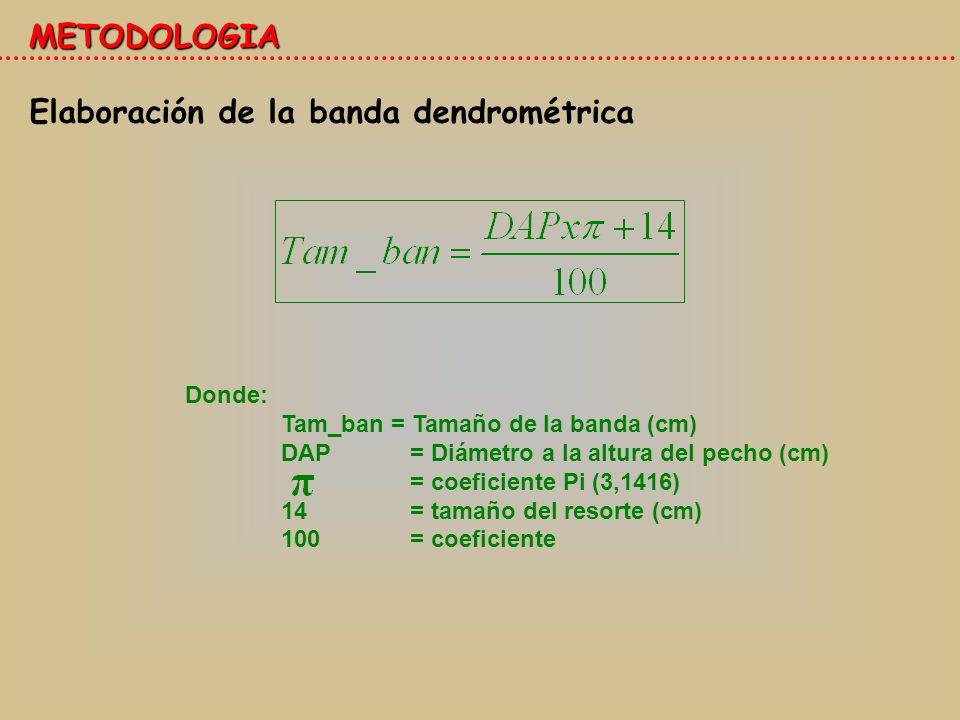 Elaboración de la banda dendrométrica