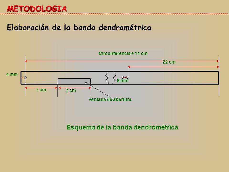 Esquema de la banda dendrométrica
