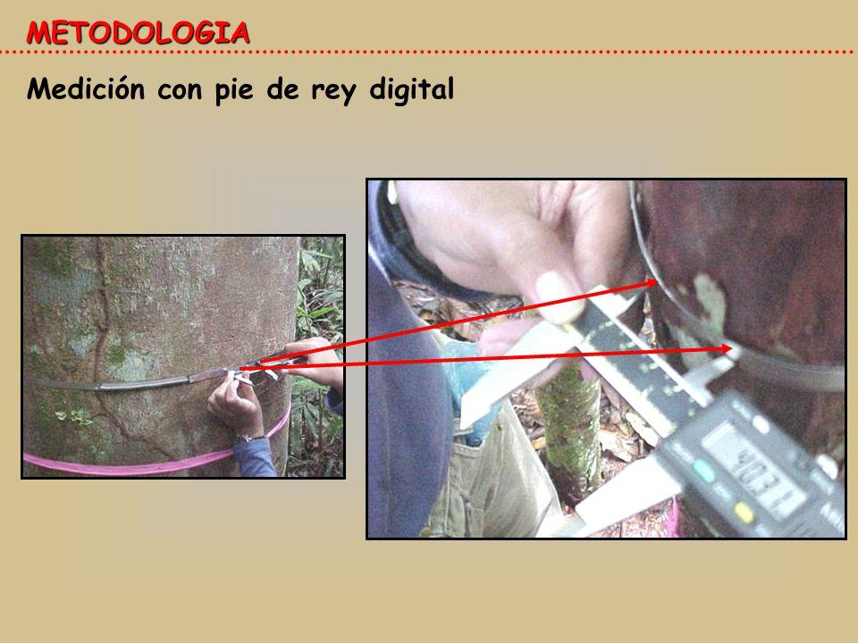 METODOLOGIA Medición con pie de rey digital