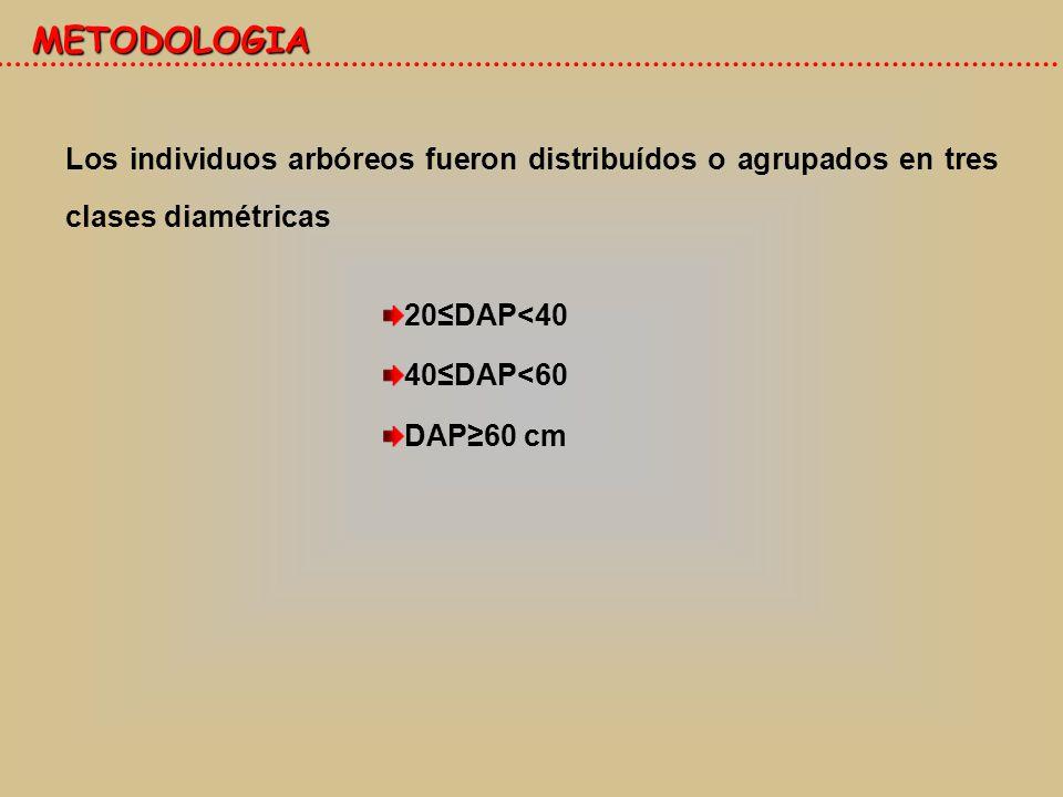METODOLOGIA Los individuos arbóreos fueron distribuídos o agrupados en tres clases diamétricas. 20≤DAP<40.