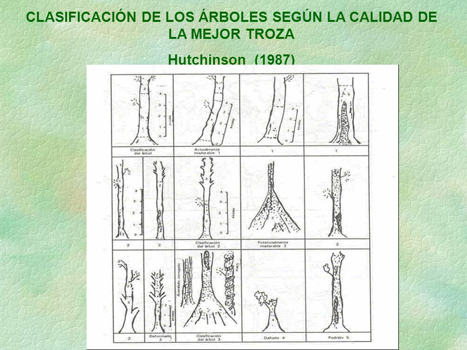 CLASIFICACIÓN DE LOS ÁRBOLES SEGÚN LA CALIDAD DE LA MEJOR TROZA
