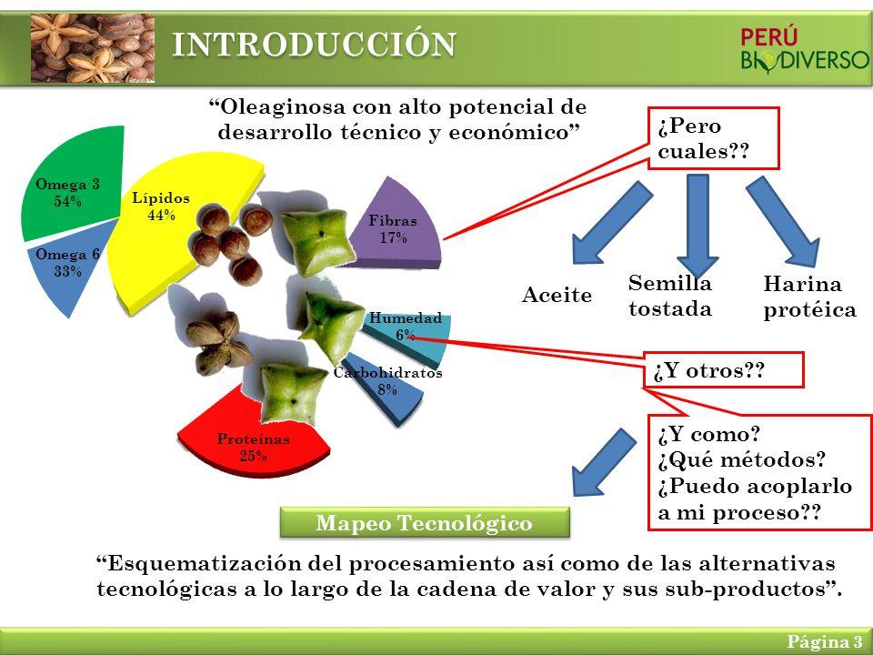Oleaginosa con alto potencial de desarrollo técnico y económico