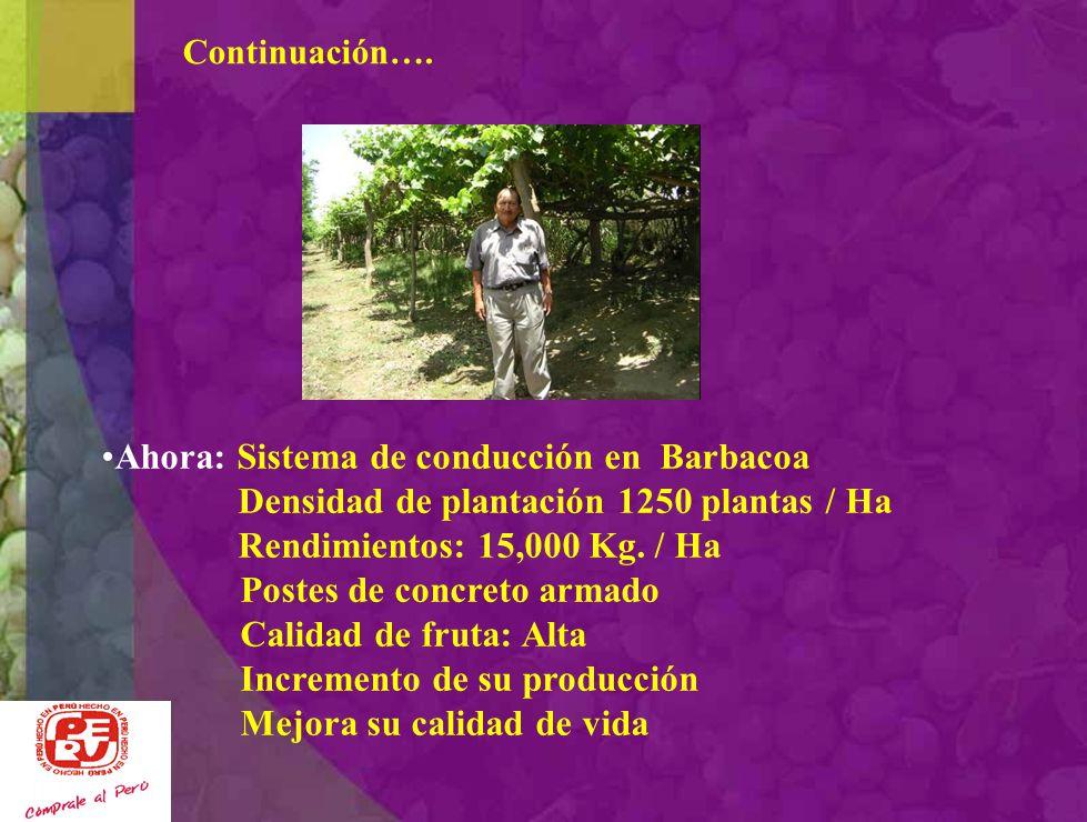Ahora: Sistema de conducción en Barbacoa