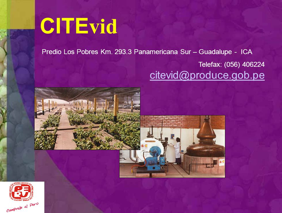 CITEvid Predio Los Pobres Km. 293.3 Panamericana Sur – Guadalupe - ICA