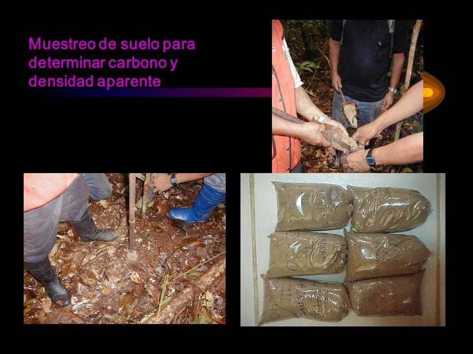 Muestreo de suelo para determinar carbono y densidad aparente