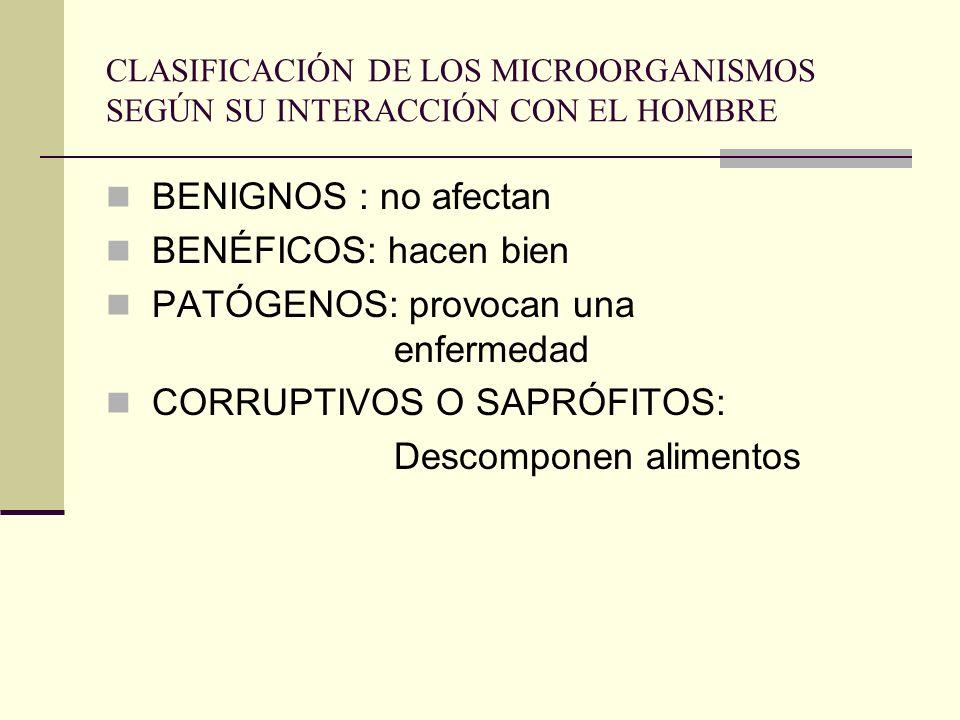 PATÓGENOS: provocan una enfermedad CORRUPTIVOS O SAPRÓFITOS: