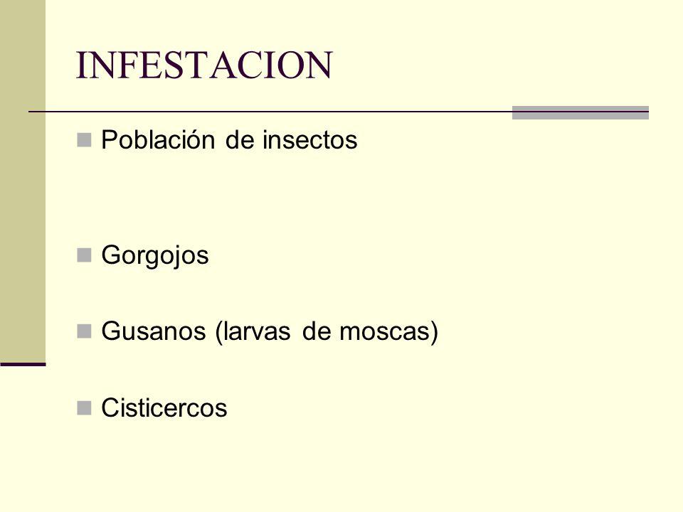 INFESTACION Población de insectos Gorgojos Gusanos (larvas de moscas)