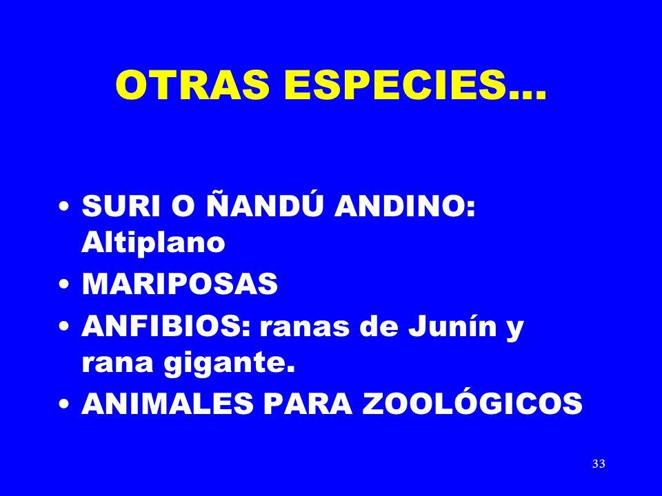 OTRAS ESPECIES... SURI O ÑANDÚ ANDINO: Altiplano MARIPOSAS