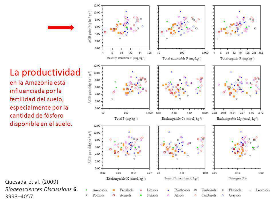La productividad en la Amazonia está influenciada por la fertilidad del suelo, especialmente por la cantidad de fósforo disponible en el suelo.