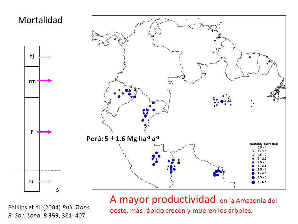 Mortalidad hj. rz. f. rm. S. Perú: 5  1.6 Mg ha-1 a-1. A mayor productividad en la Amazonia del oeste, más rápido crecen y mueren los árboles.
