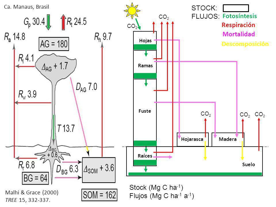 STOCK: FLUJOS: Fotosíntesis Respiración Mortalidad Descomposición