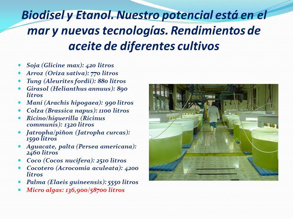 Biodisel y Etanol. Nuestro potencial está en el mar y nuevas tecnologías. Rendimientos de aceite de diferentes cultivos