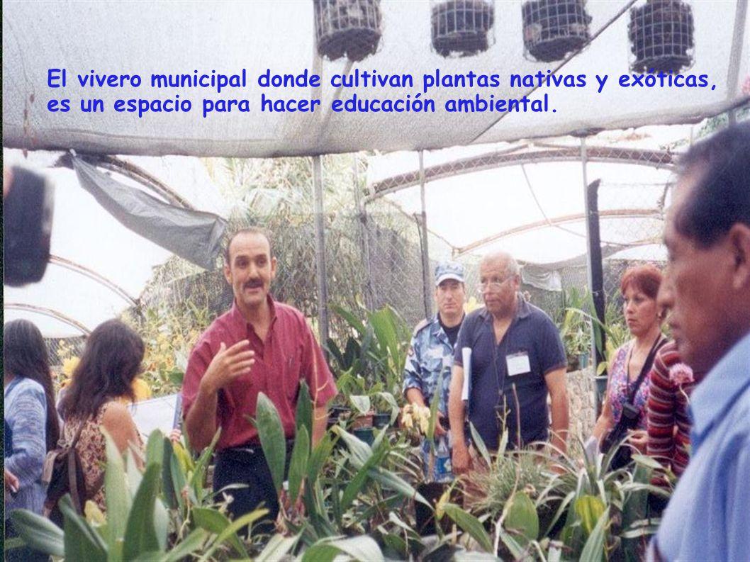 El vivero municipal donde cultivan plantas nativas y exóticas,