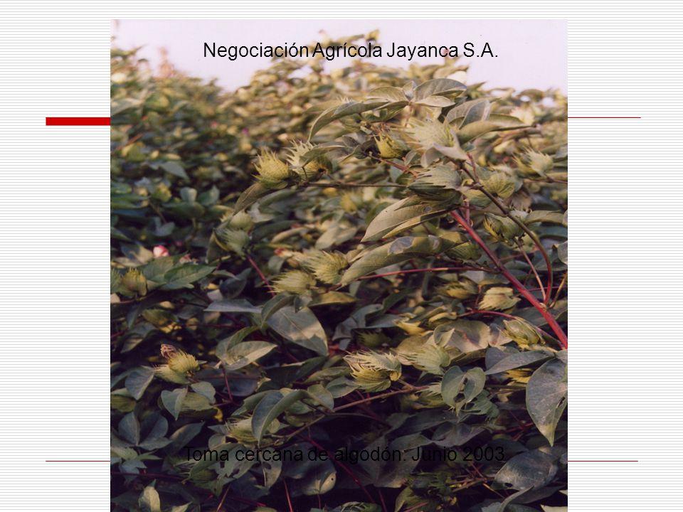 Negociación Agrícola Jayanca S.A.